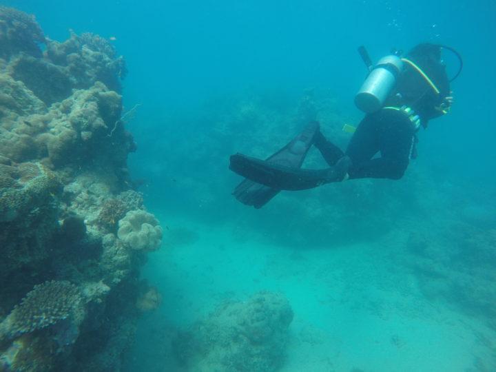 Koraller som dör i Stora barriärrevet utanför Australiens kust