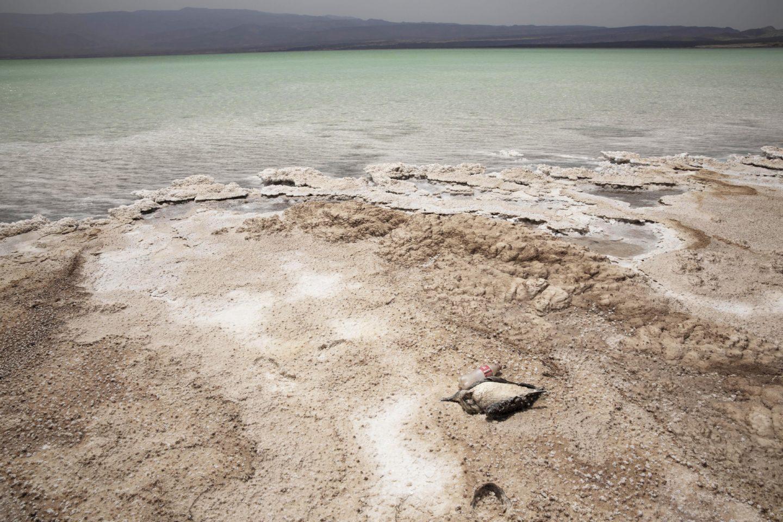 Djibouti flyktingar drunkning