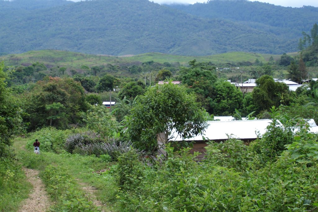 Grönskande bergsmiljö i Chiapas, Mexiko.