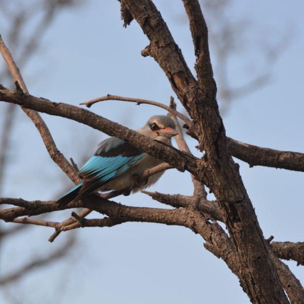 Färggrann kungsfiskare på en gren.