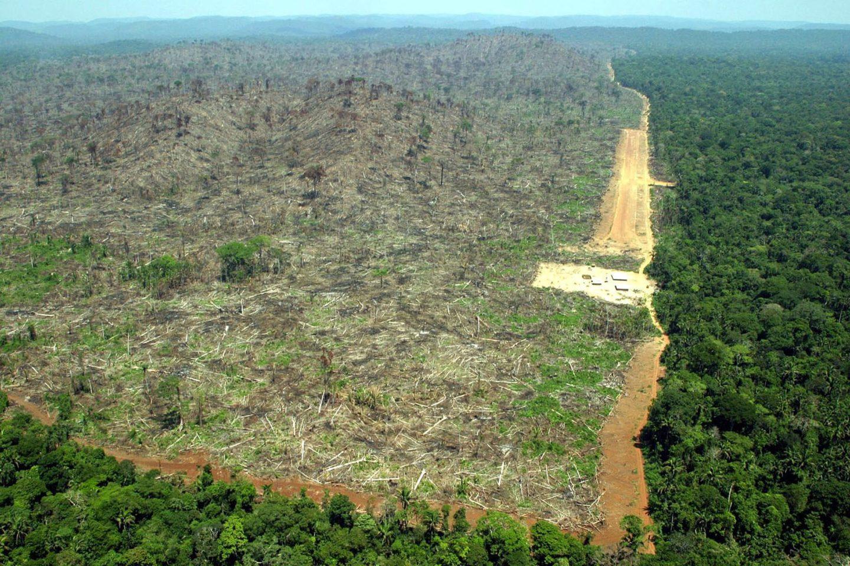 skövling av Amazonas